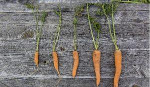 Kurs i hantverk hållbart återbruk och odling