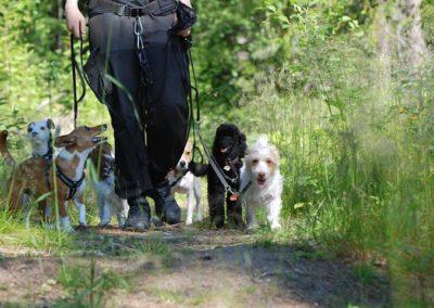 Hundskötare två inriktningar