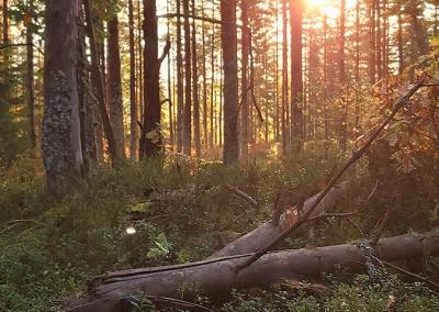 Uthålligt skogsbruk på din mark